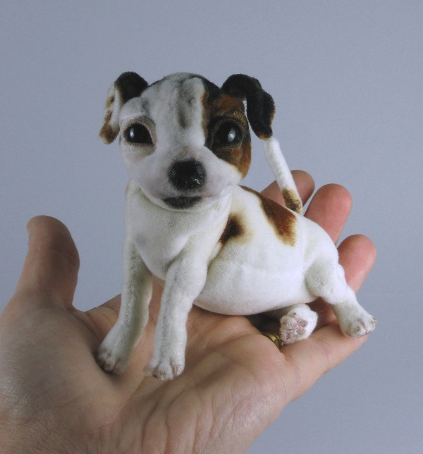 Miniature Jack Russell Terrier