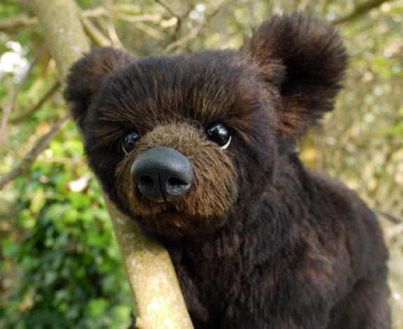 Bear Cub Rescued As Dog