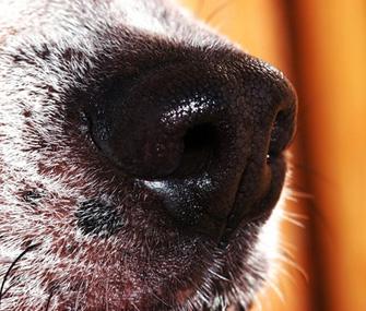 1359131739_dog_nose_close_up.jpg