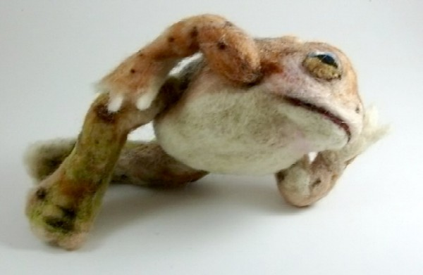 toadpic2.JPG