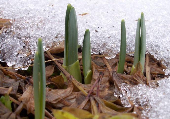 SpringBulbs.jpg