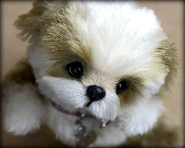 1358874333_puppy1_copy.jpg
