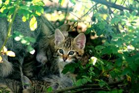 wildcats.jpg