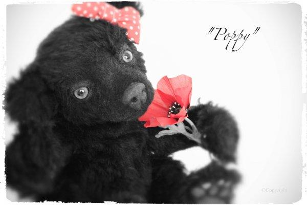 1394976059_poppy4.jpg