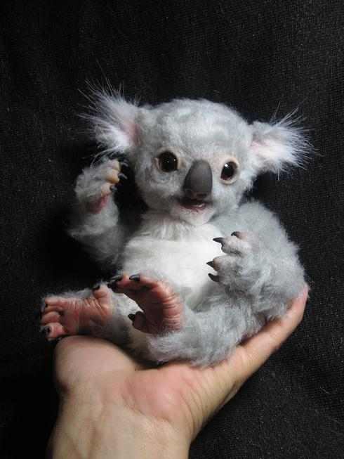The gallery for --> Newborn Koala Baby