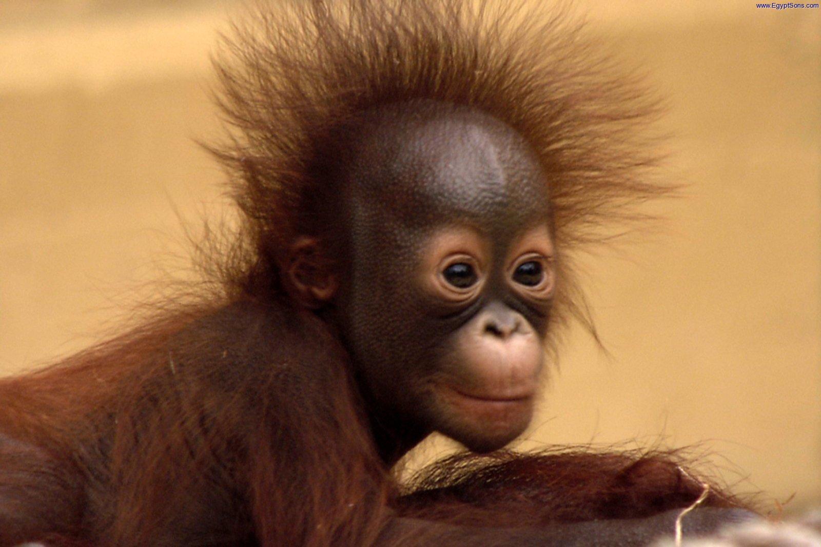 Baby_Planet_ep01_Orangutan.jpg