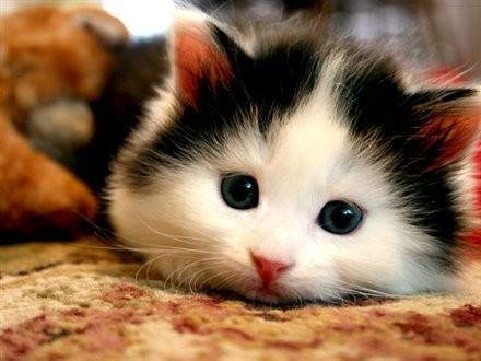 cute_cat_on_rug.jpg