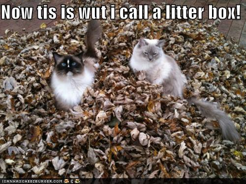 funny-pictures-now-tis-is-wut-i-call-a-litter-box.jpg
