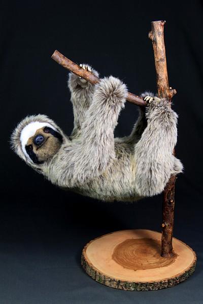 1355481063_sloth2162.jpg